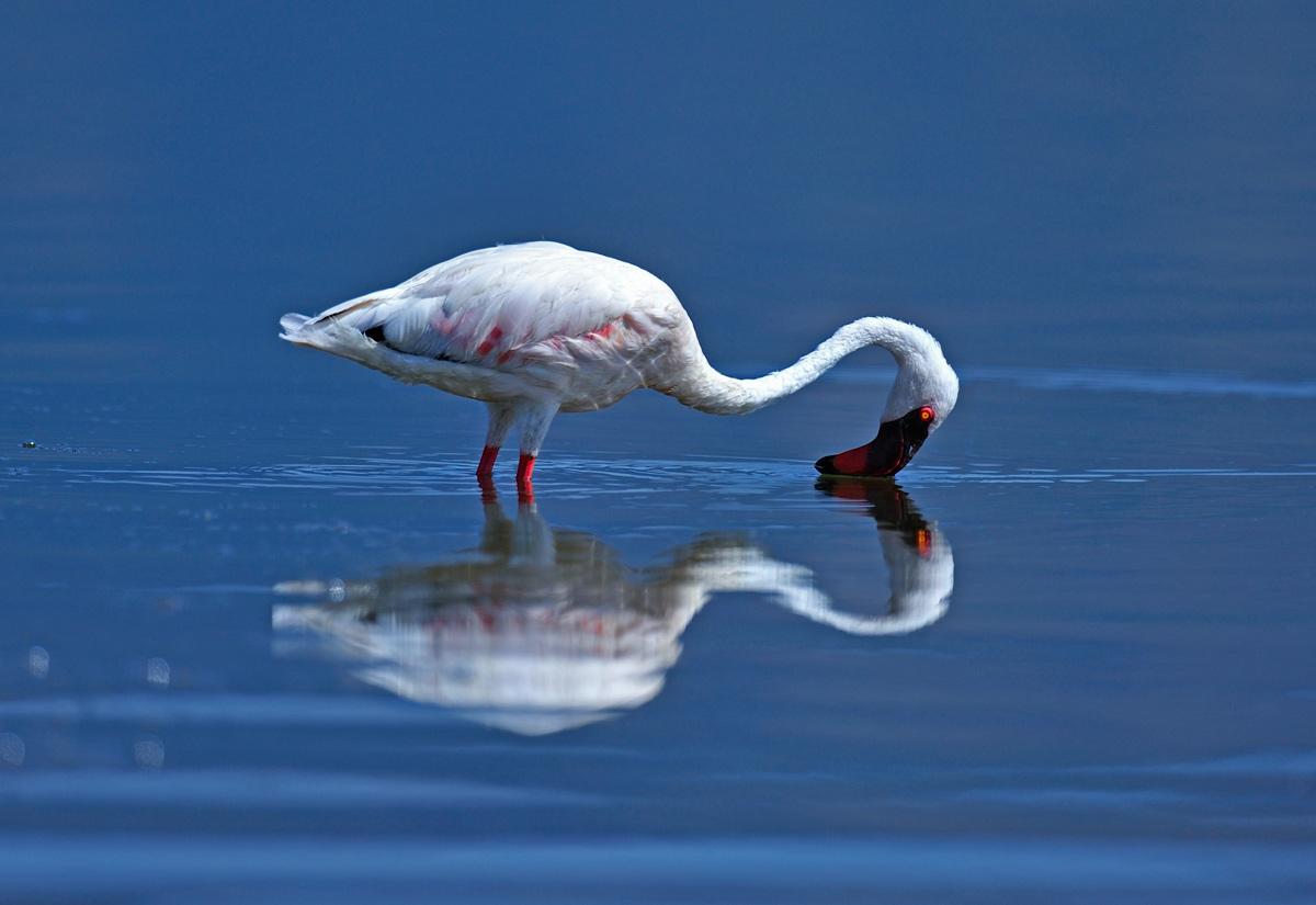 "фото ""Mirror"" метки: природа,"