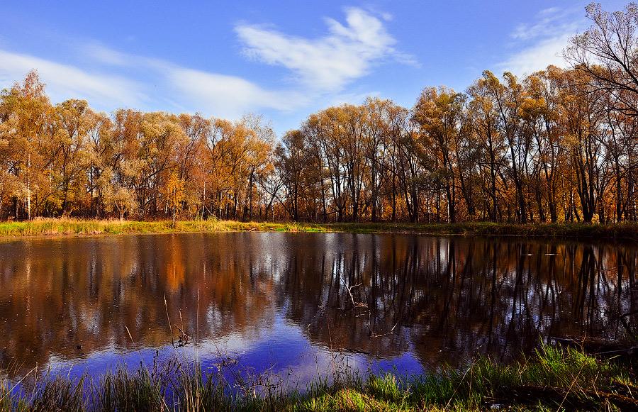 """фото """"Заброшенный пруд"""" метки: природа, вода, лес, осень, парк, солнце"""