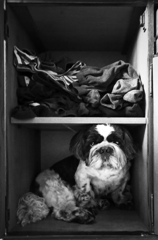 """фото """"Бывают домовые, даже вагонные, а я - тумбочковый"""" метки: черно-белые, собака в тумбочке"""