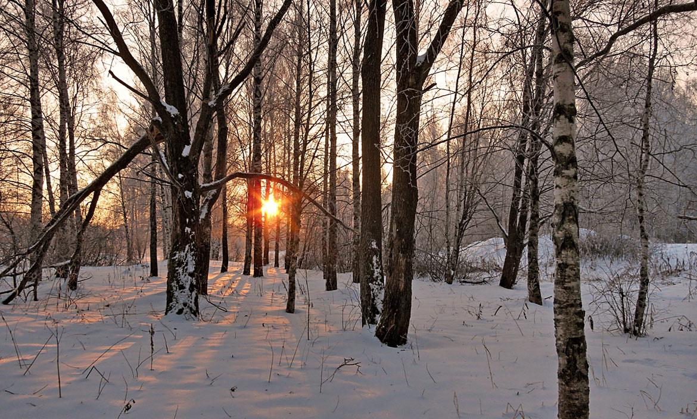 """фото """"Холодное солнце декабря"""" метки: пейзаж, зима, лес, снег, солнце"""