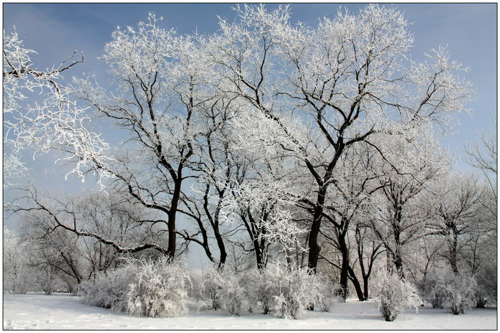 """фото """"***"""" метки: пейзаж, природа, trees, зима, снег"""