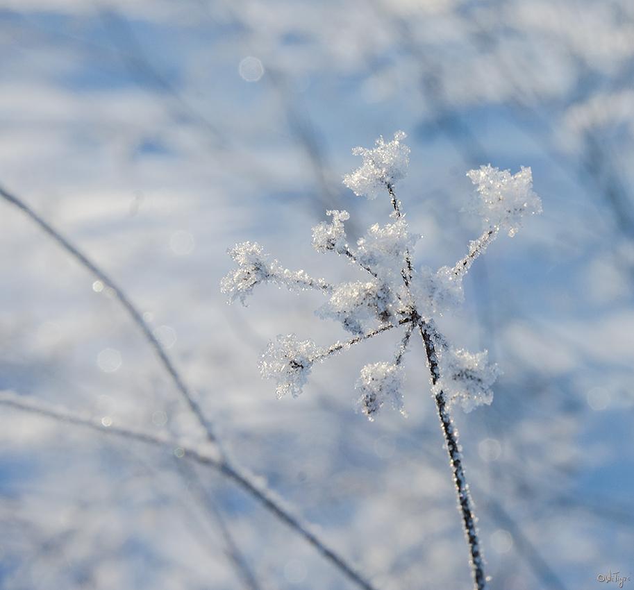 """фото """"Замороженная"""" метки: макро и крупный план, зима"""