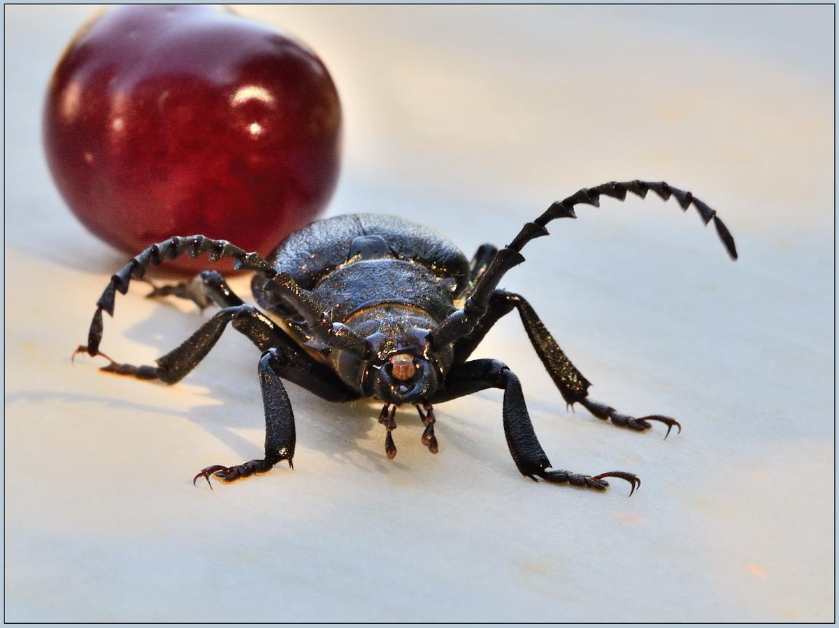 """фото """"***"""" метки: макро и крупный план, насекомое"""