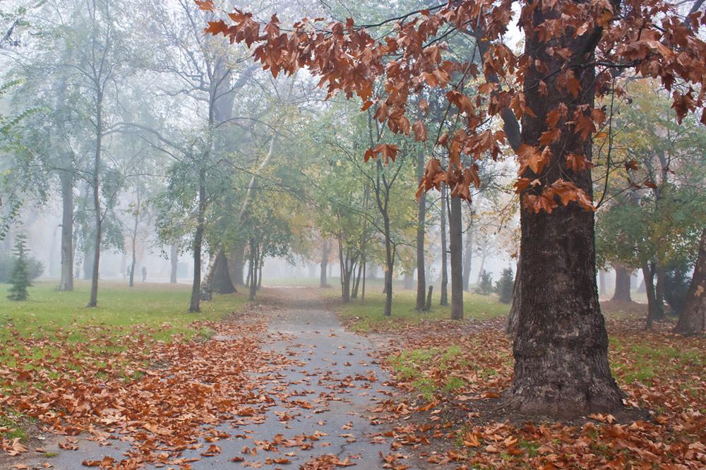 """фото """"Осень в парке"""" метки: разное,"""