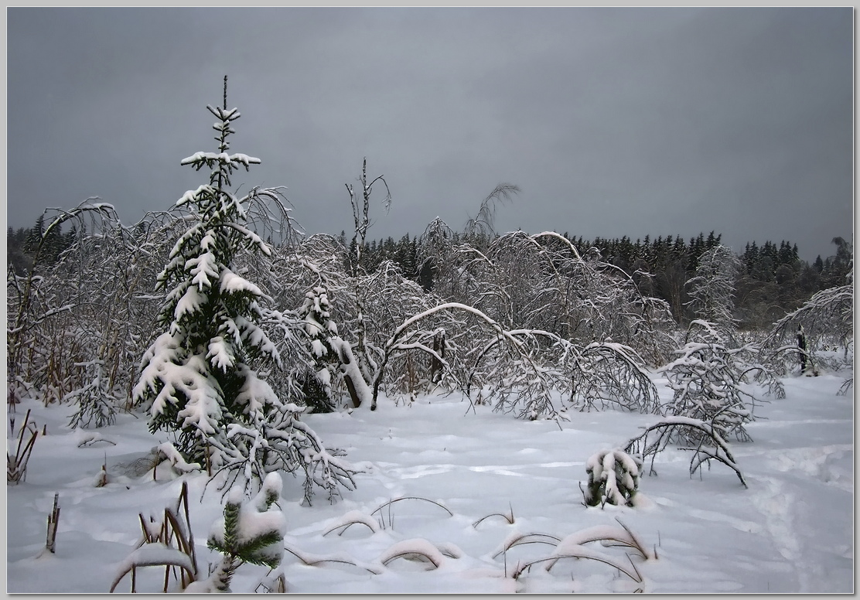 """фото """"В лесу родилась елочка"""" метки: пейзаж,"""