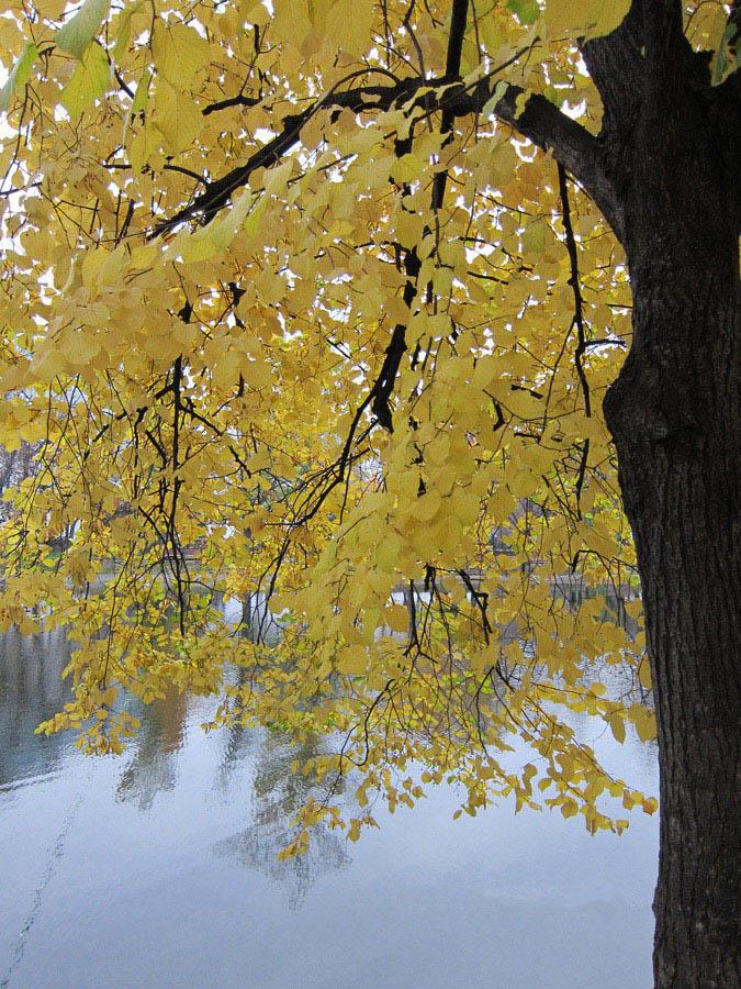 """фото """"Силуэт осени"""" метки: пейзаж, осень"""