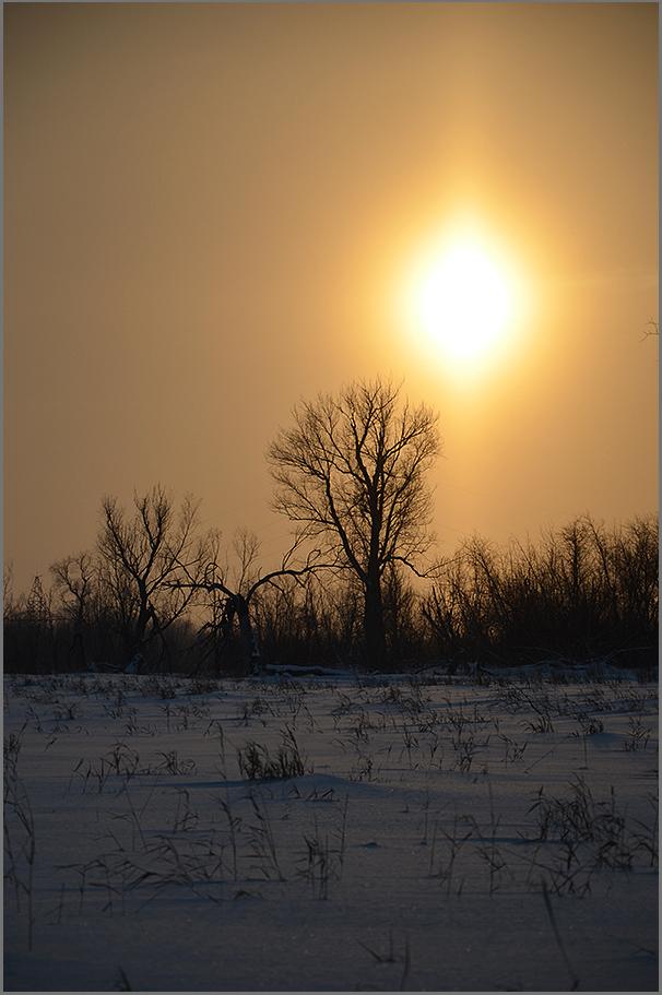 "фото ""***"" метки: пейзаж, природа, лес, ночь"