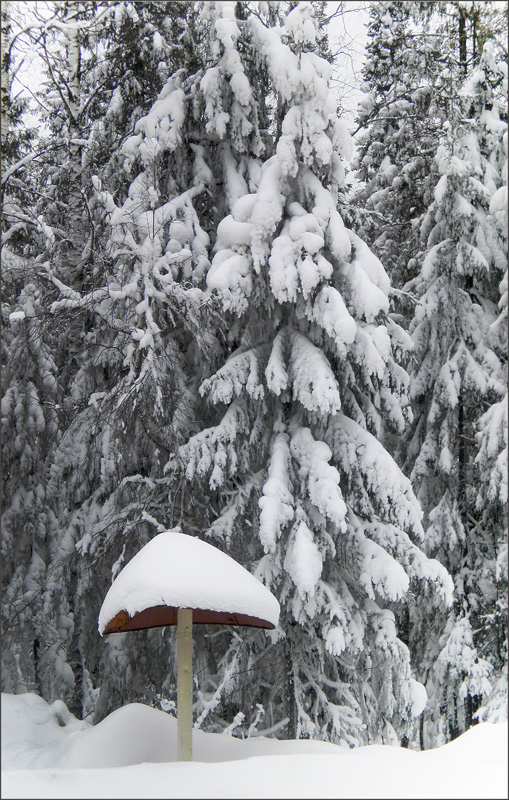 "фото ""не грибной сезон-2"" метки: , грибок, лес, снег"