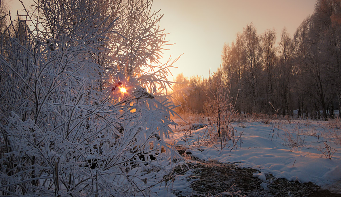 """фото """"Холодный рассвет"""" метки: пейзаж, ветви, деревья, зима, рассвет, снег, солнце"""