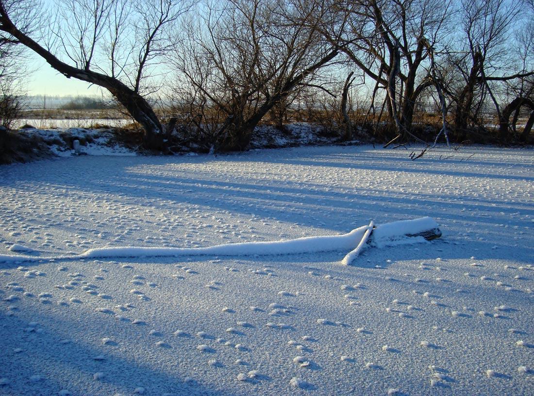 """фото """"..снежные мурашки.."""" метки: пейзаж, природа, декабрь"""