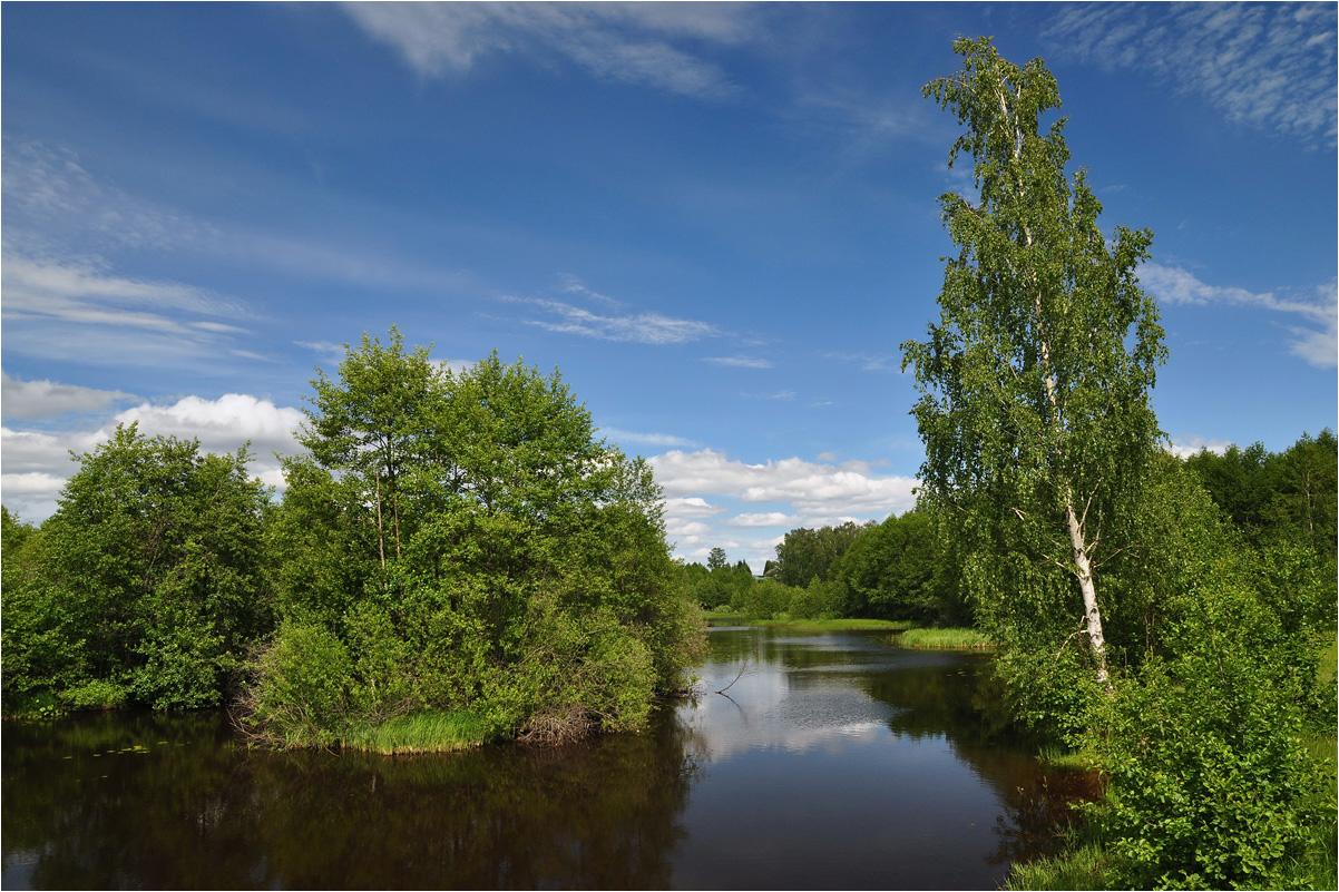 """фото """"Тихая заводь"""" метки: пейзаж, природа, березы, вода, лес, лето, облака, река, трава"""