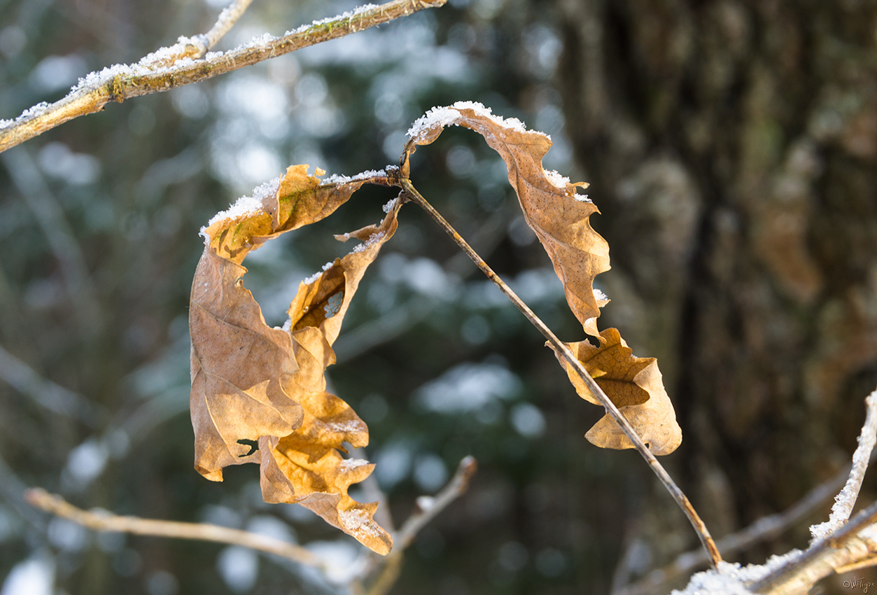 """фото """"Решили до весны остаться"""" метки: макро и крупный план, зима, лес"""