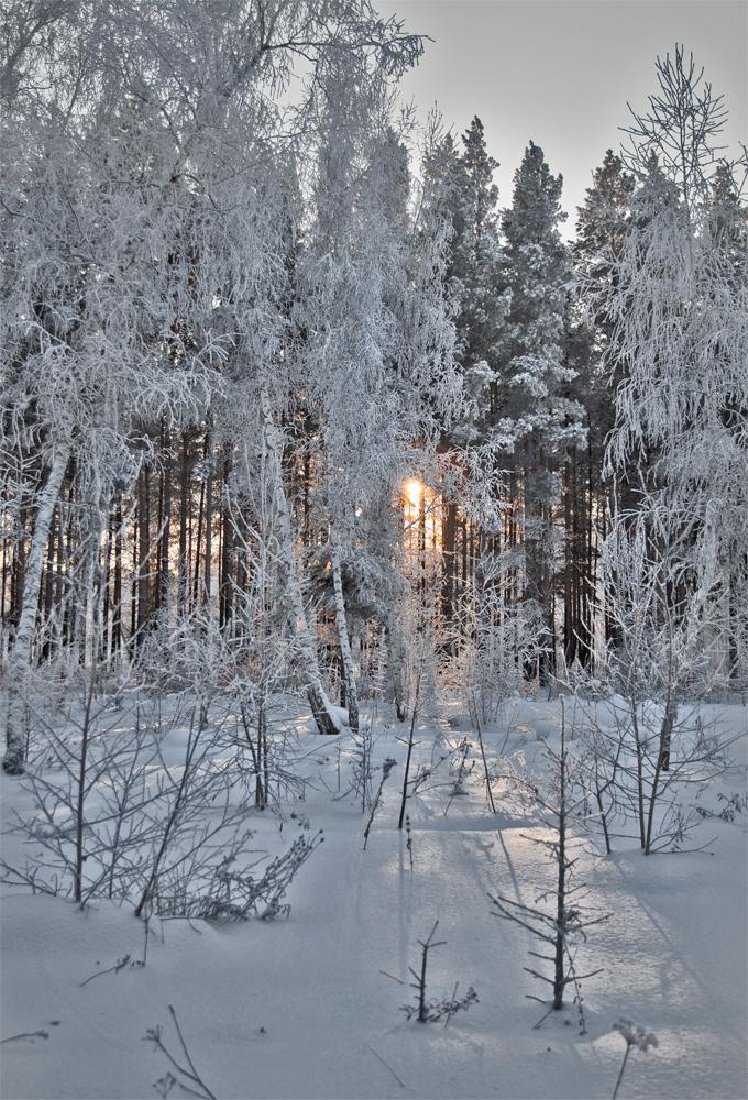 """фото """"Короток зимний день"""" метки: пейзаж, снег, тени в лучах уходящего солнца"""