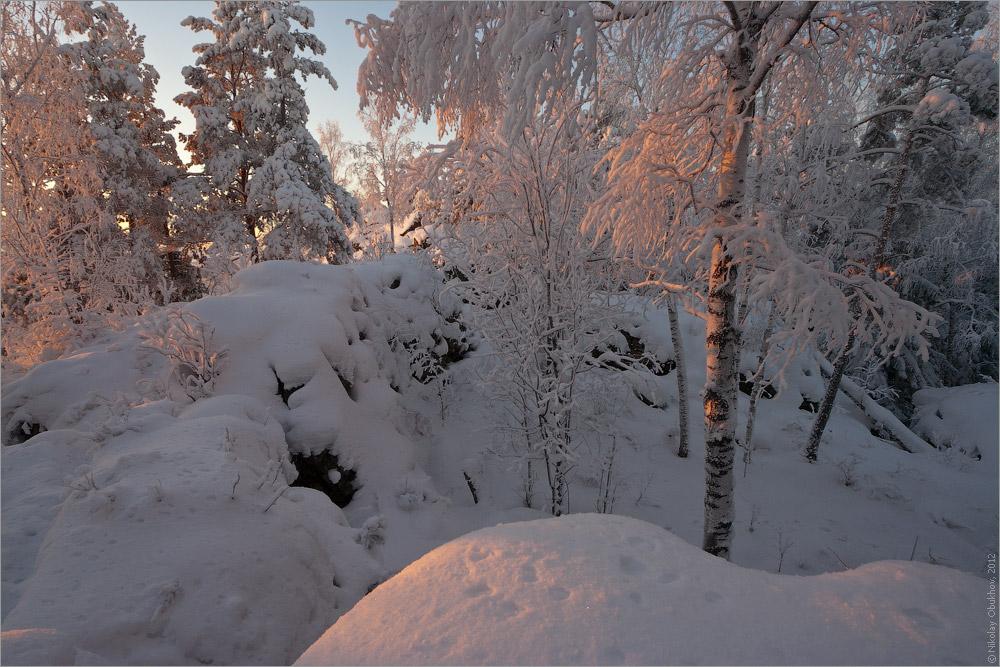 """фото """"Светает... / 0215_0271"""" метки: пейзаж, зима, лес, рассвет"""