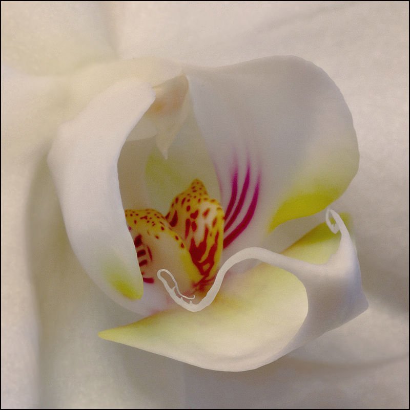 """фото """"* * *"""" метки: природа, макро и крупный план, орхидея, цветы"""
