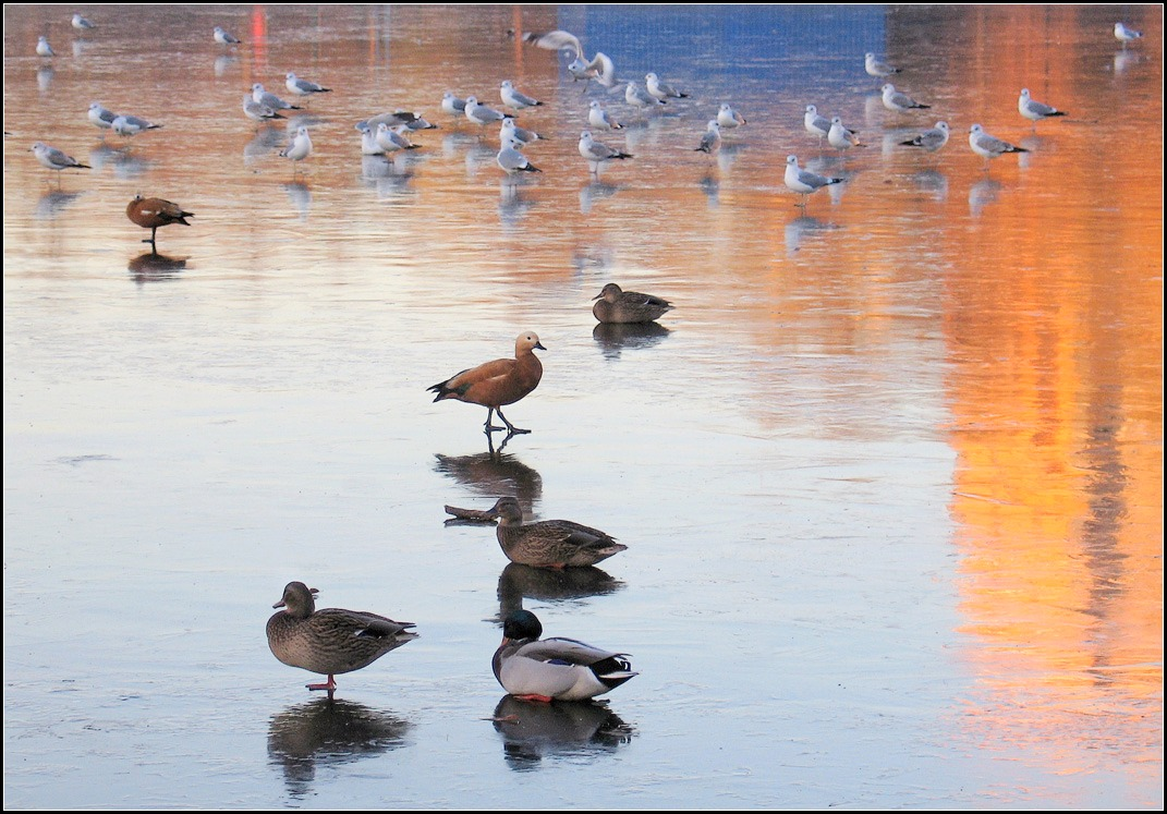 """photo """"on thin ice"""" tags: nature, city,"""