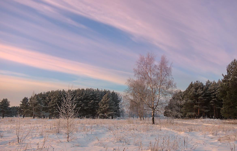 "фото ""На рассвете"" метки: пейзаж, лес, небо, рассвет, снег"