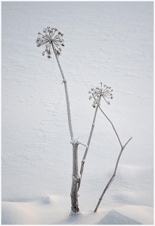 """фото """"***"""" метки: пейзаж, природа, разное, снег"""