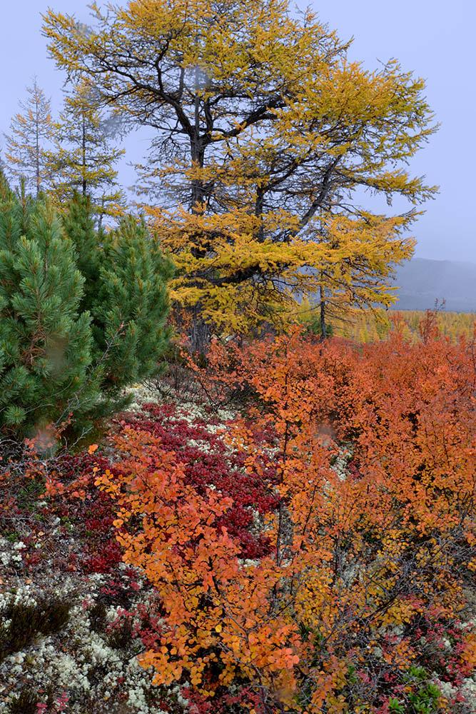 """фото """"Дождь и краски"""" метки: пейзаж, лес, осень, тундра"""
