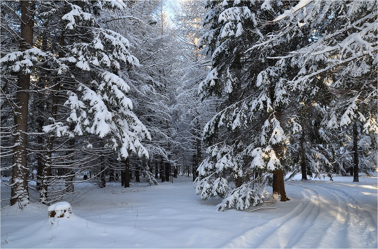 """фото """"Притихший лес"""" метки: пейзаж, дорога, ели, зима, иней, лес, снег"""