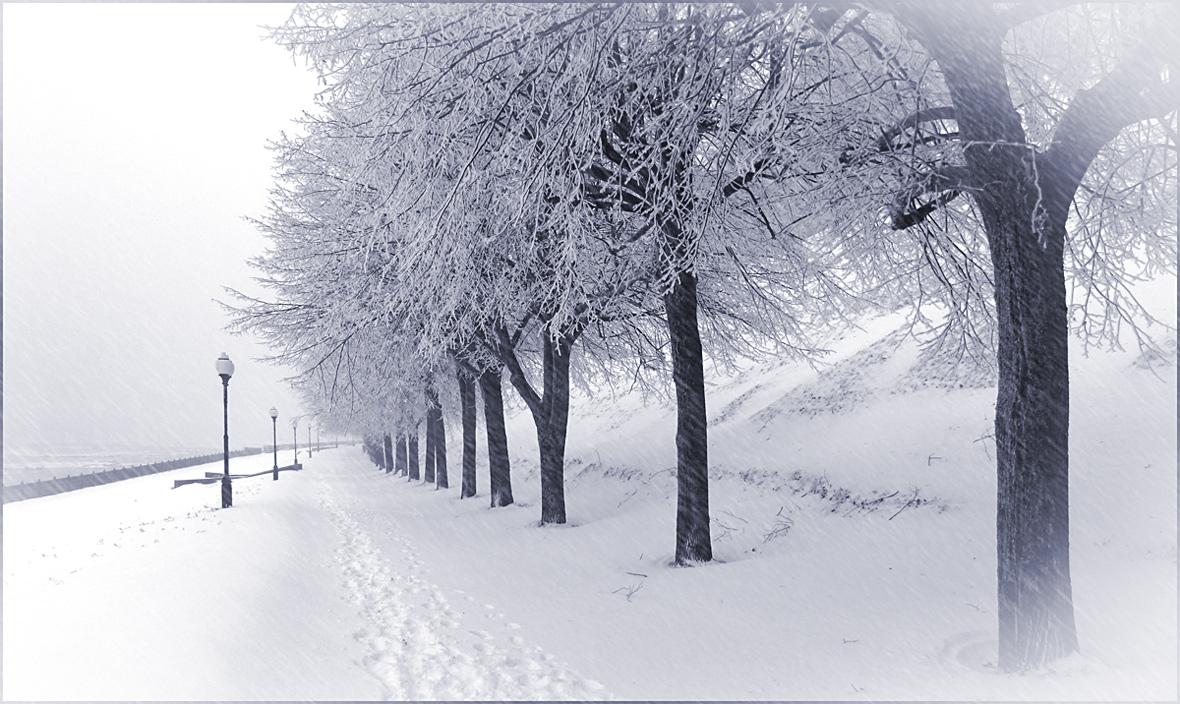 """фото """"Заснеженная аллея"""" метки: пейзаж, черно-белые, город, ветви, днревья, зима, снег"""