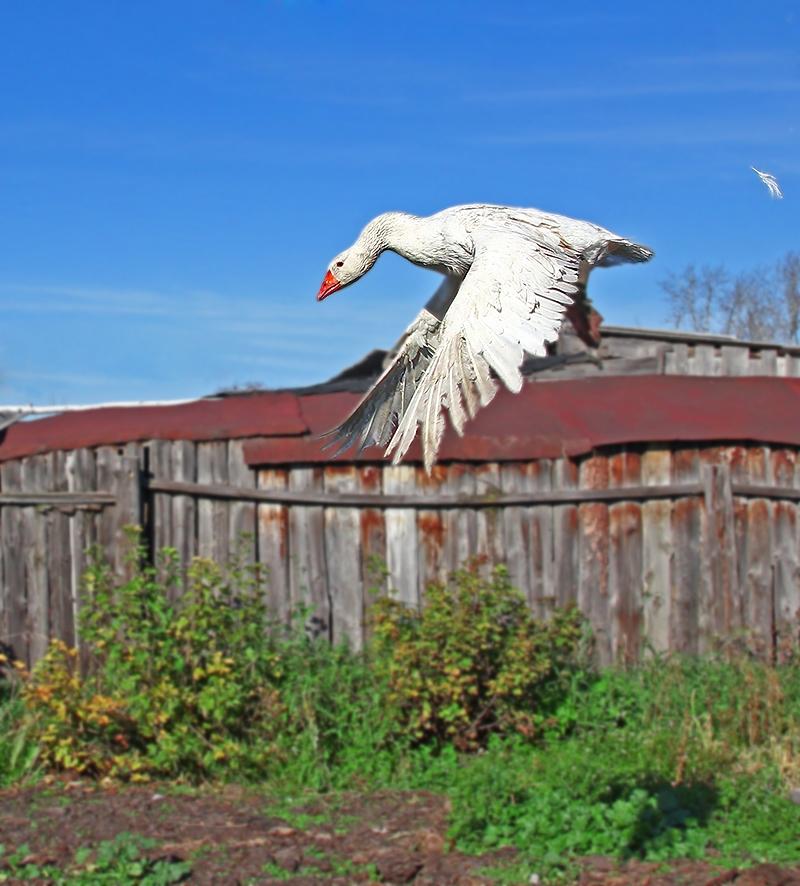 """фото """"А мне летать охота..."""" метки: природа,"""