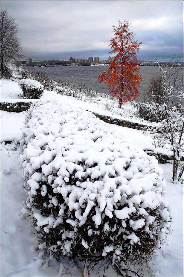 """фото """"у зимы цвет белый"""" метки: пейзаж, природа, город, дерево, зима, кусты"""