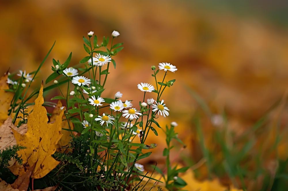 """фото """"накануне"""" метки: природа, Европа, Литва, осень, оченькрасиво, суперверинайс, цветы, шедевр"""