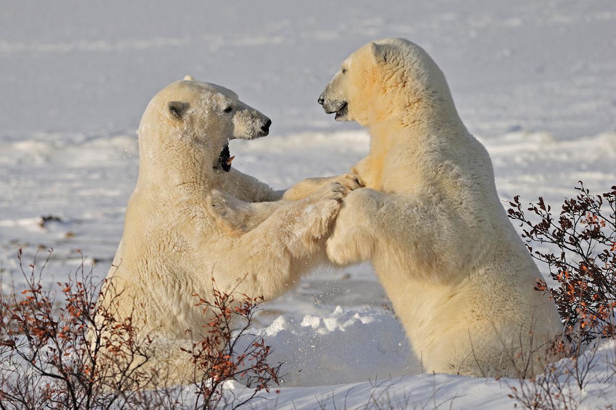 """фото """"Снежности"""" метки: природа,"""