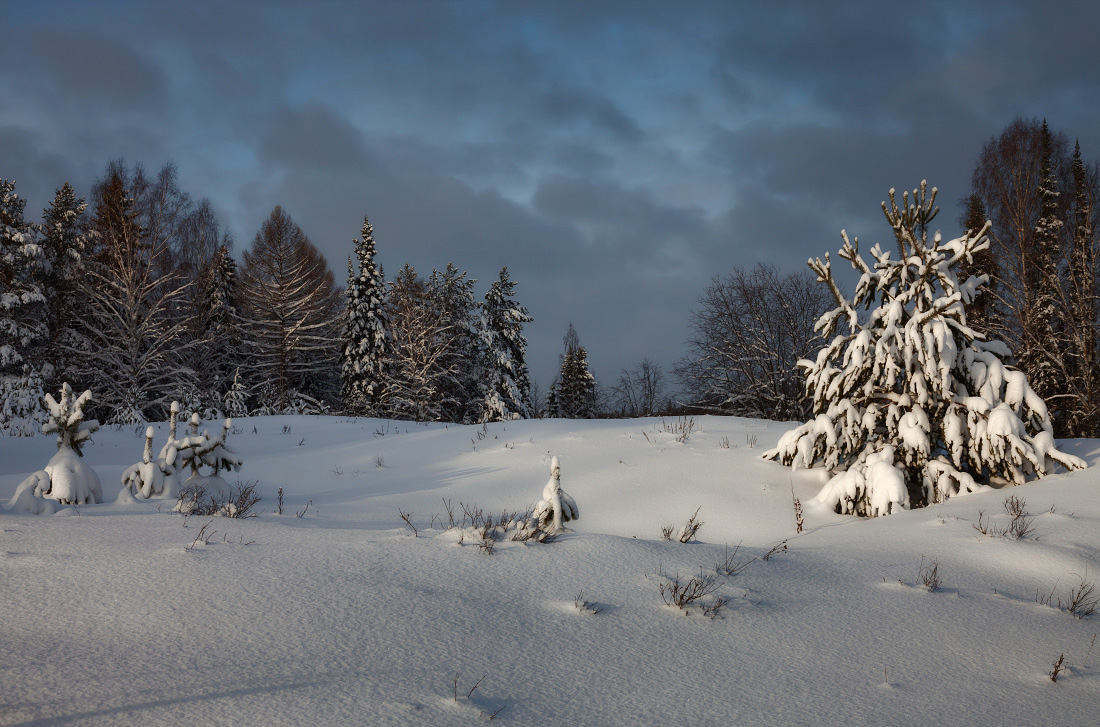 "photo ""***"" tags: landscape, forest, snow, sun, winter, елки, мороз, сугробы, текстуры, тучи"