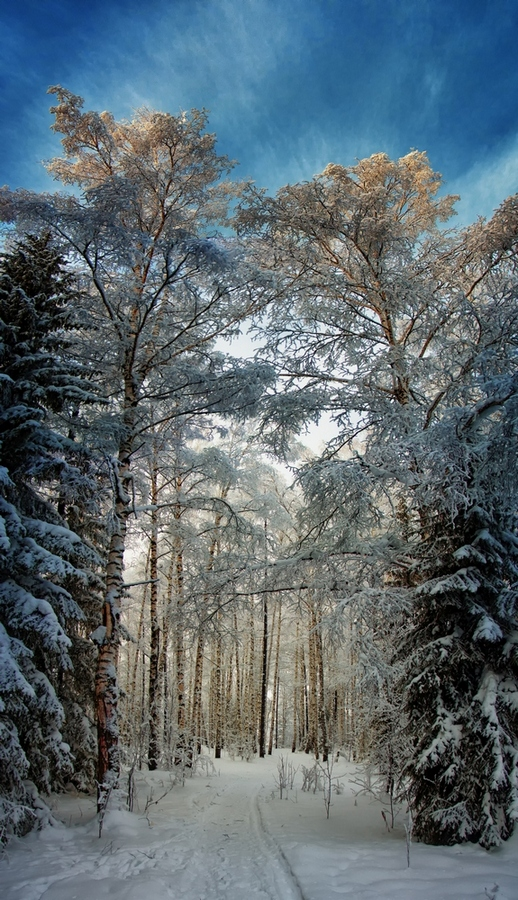 "photo ""***"" tags: panoramic, landscape, nature, forest, sunset, winter"