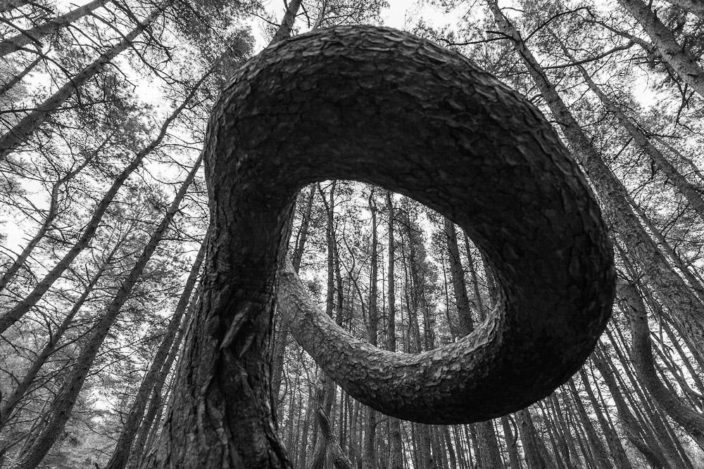 """фото """"не названное"""" метки: природа, черно-белые,"""