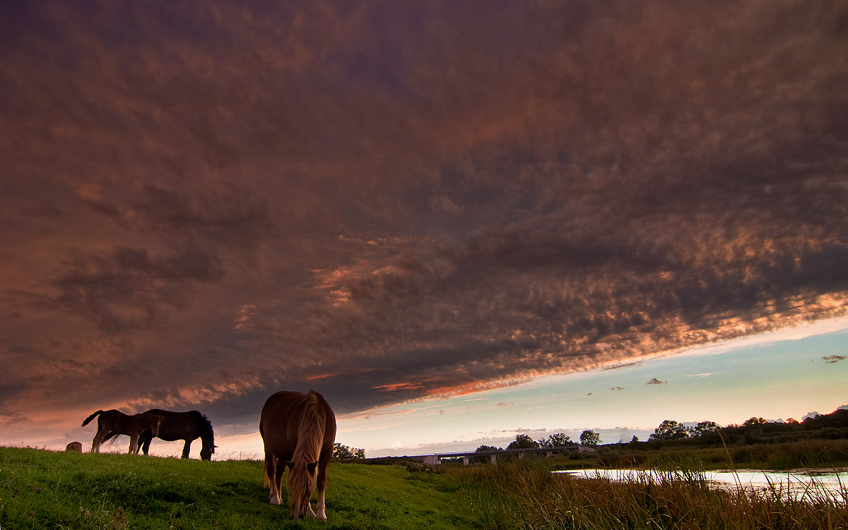 """фото """"На лугу закат."""" метки: пейзаж, природа, Луг закат"""