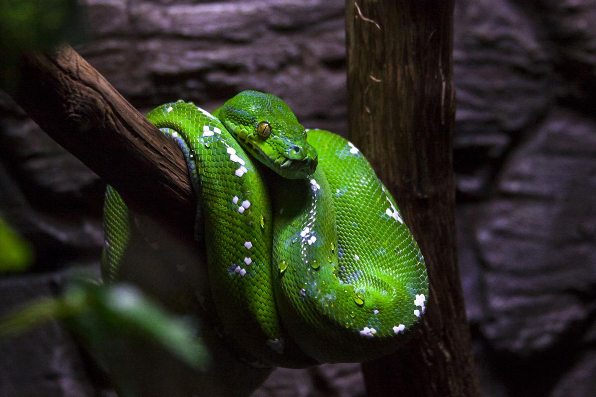 """фото """"С наступающим гадом)))"""" метки: природа, разное, домашние и дикие животные, змеи"""