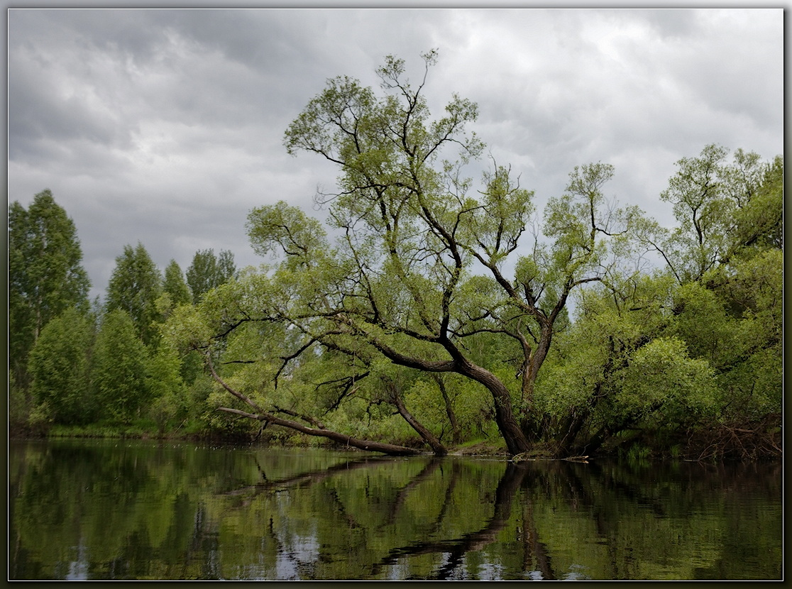 """фото """"Старая ива"""" метки: пейзаж,"""