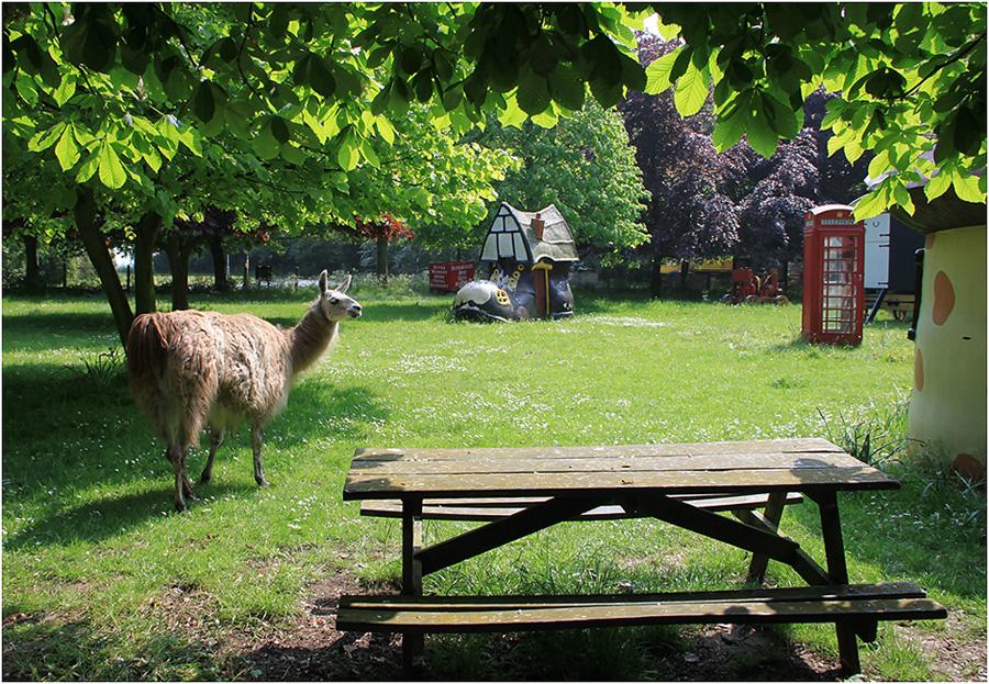 """фото """"Когда есть и стол и дом..."""" метки: природа, домашние животные"""