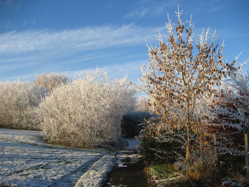 """фото """"Frost"""" метки: пейзаж, зима"""