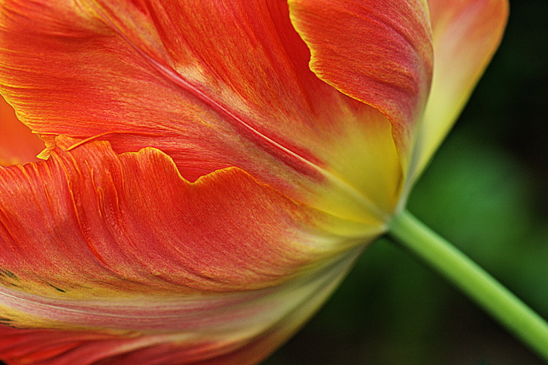 "photo ""The Color of Flowers"" tags: macro and close-up,"