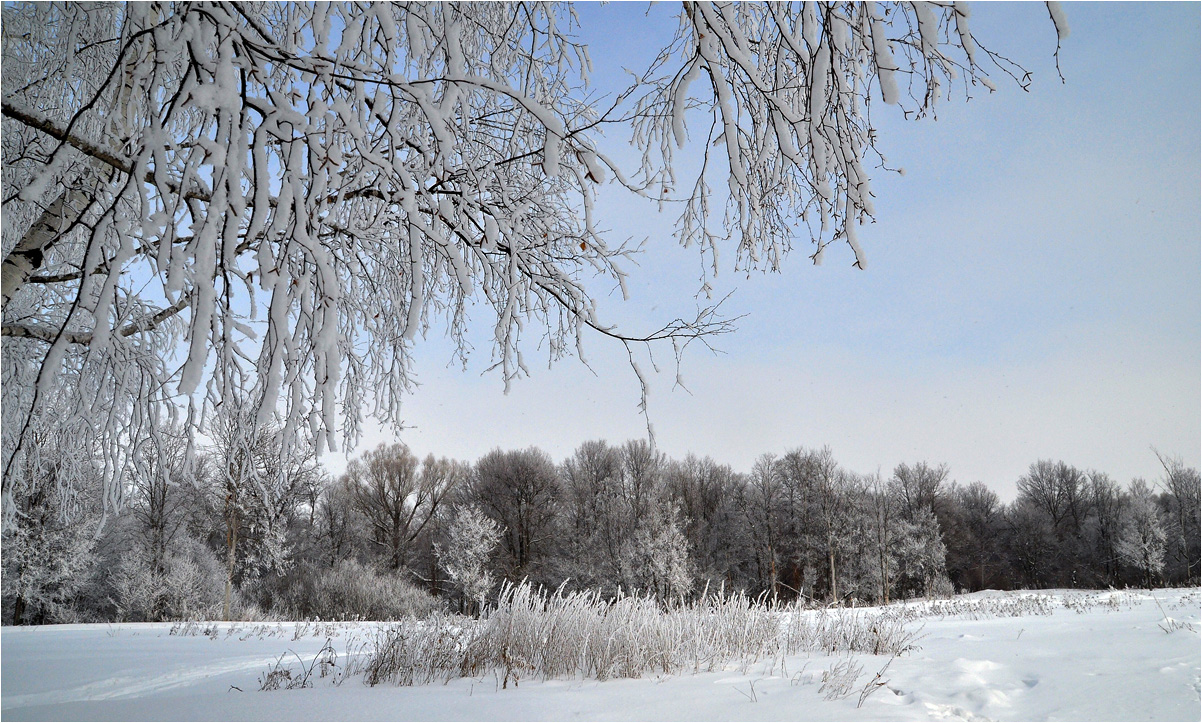 "photo ""***"" tags: landscape, birches, forest, snow, winter"