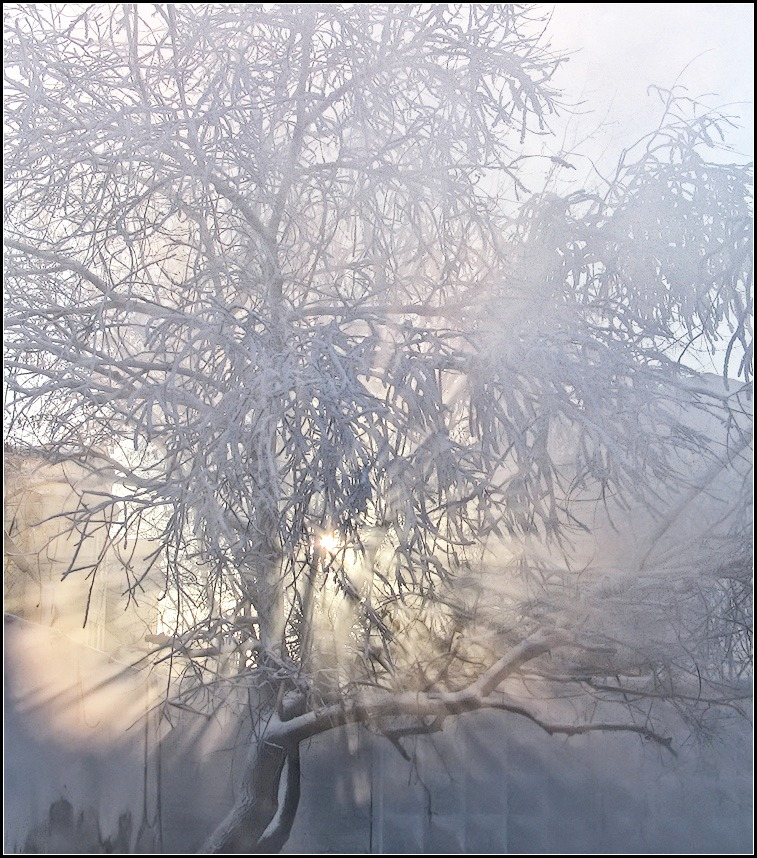 "photo ""frosty morning"" tags: nature, city,"