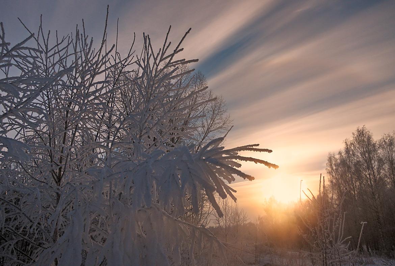"""фото """"Рождение зимнего дня"""" метки: пейзаж, ветви, днревья, зима, небо, рассвет, солнце"""