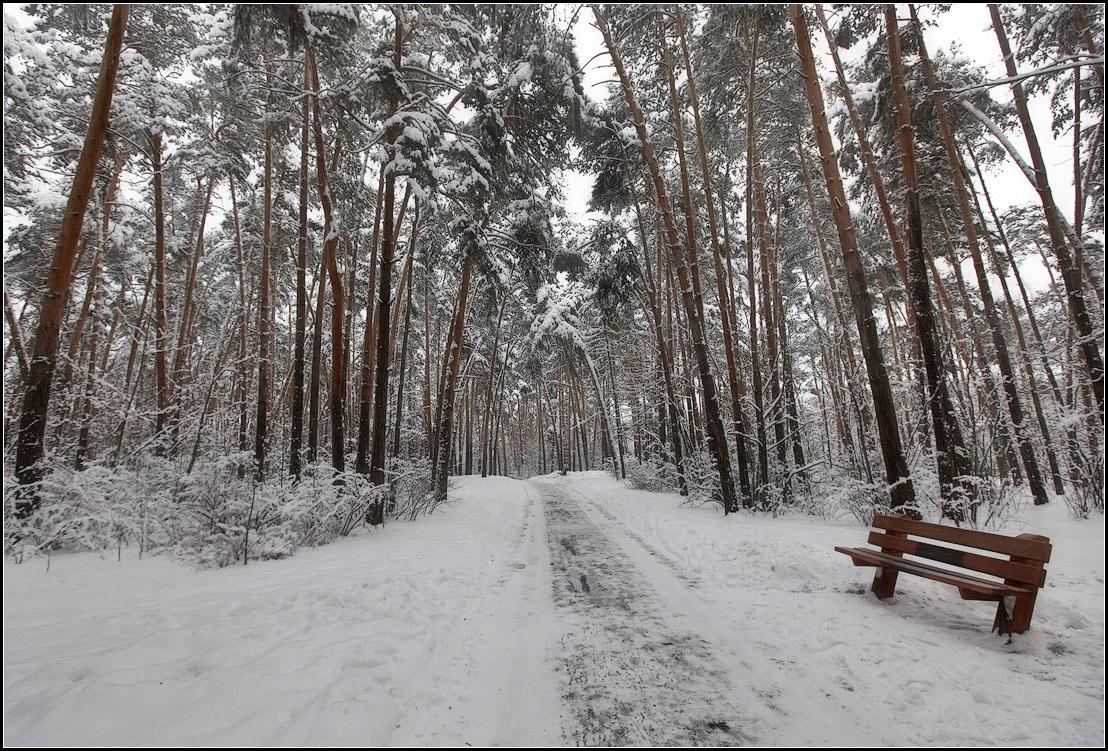 "фото ""зима в парке"" метки: пейзаж, природа,"