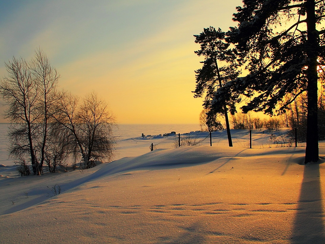 "фото ""Вечерняя заря."" метки: пейзаж, деревья, снег"