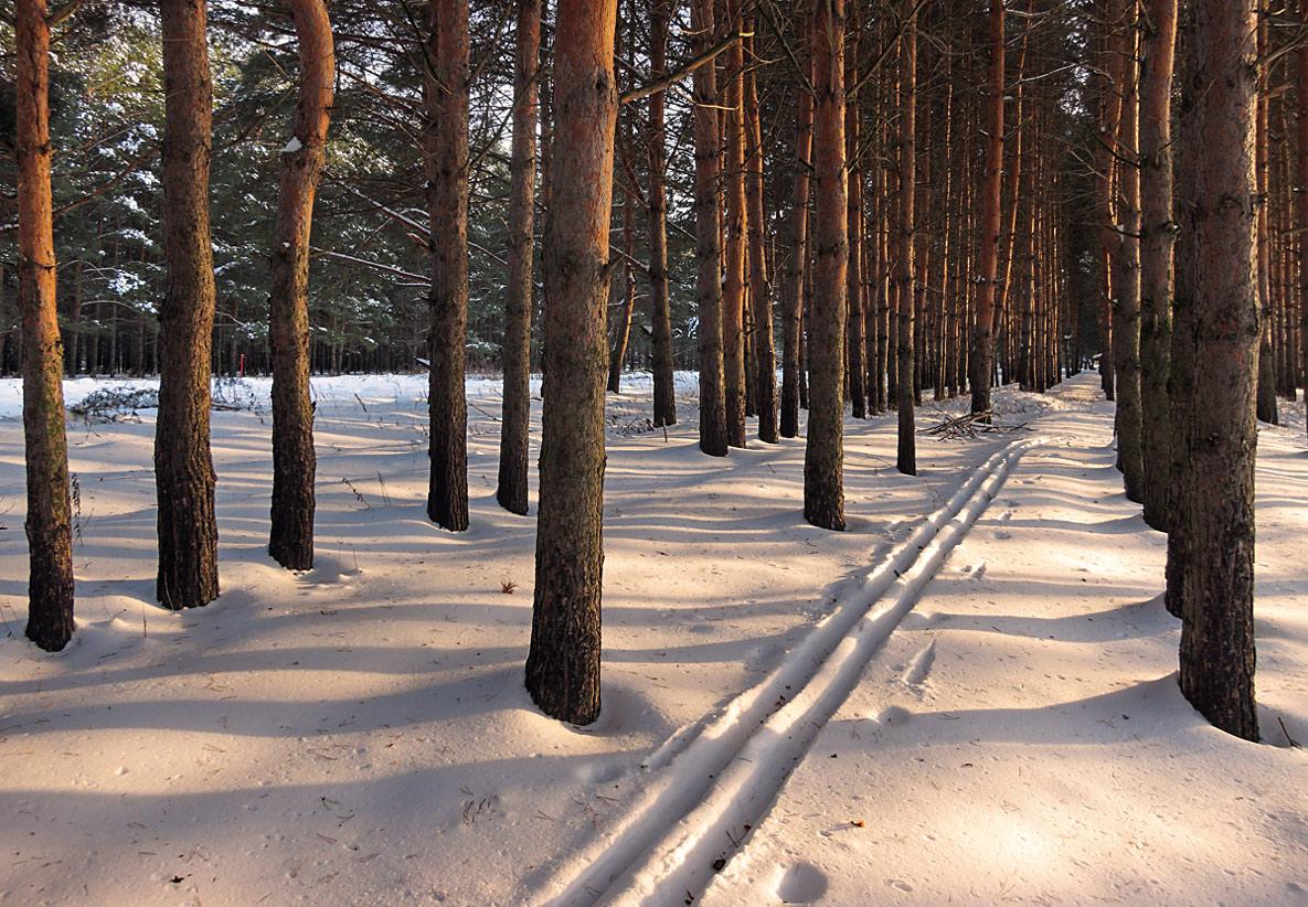 """фото """"Солнечная лыжня"""" метки: пейзаж, днревья, зима, лес, снег, солнце"""