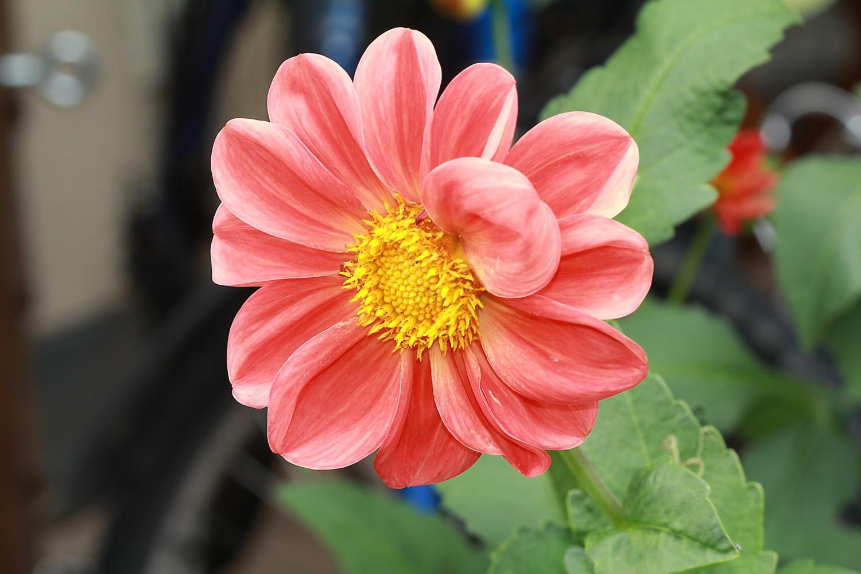 """фото """"Цветок в акварели..."""" метки: природа,"""