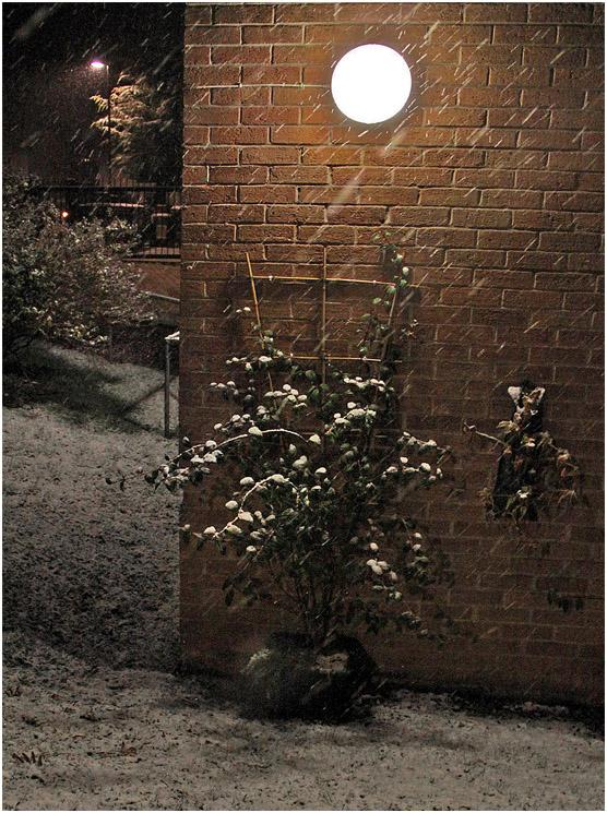 """фото """"Новогодняя погода. или Не верь глазам своим! (из запасников)"""" метки: стрит-фото,"""