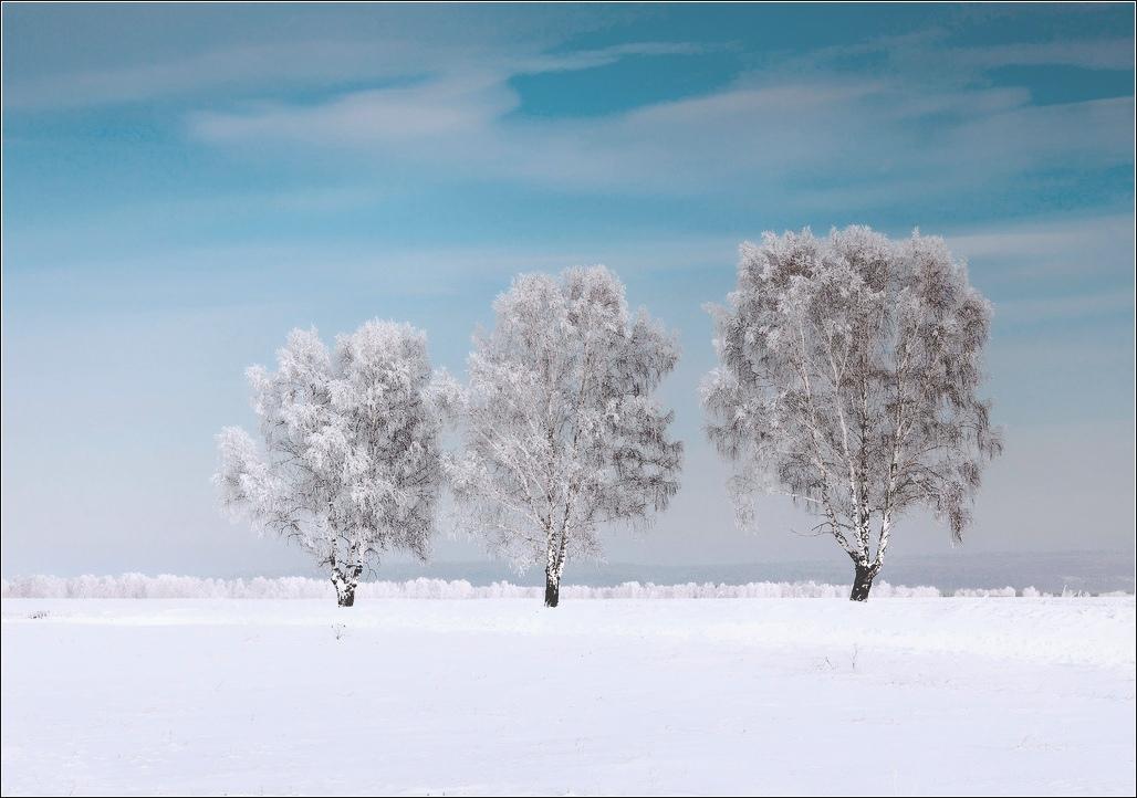 """фото """"Три новогодних березки...31 декабря"""" метки: пейзаж,"""