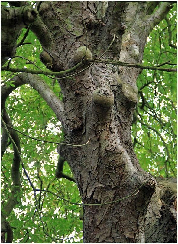 """фото """"***"""" метки: природа, дерева, дерево"""
