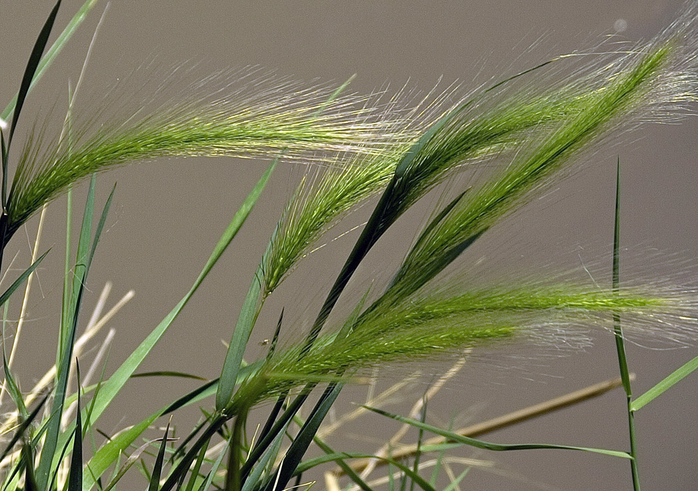 "photo ""Rio Grande Grasses"" tags: macro and close-up, nature, Rio Grande"
