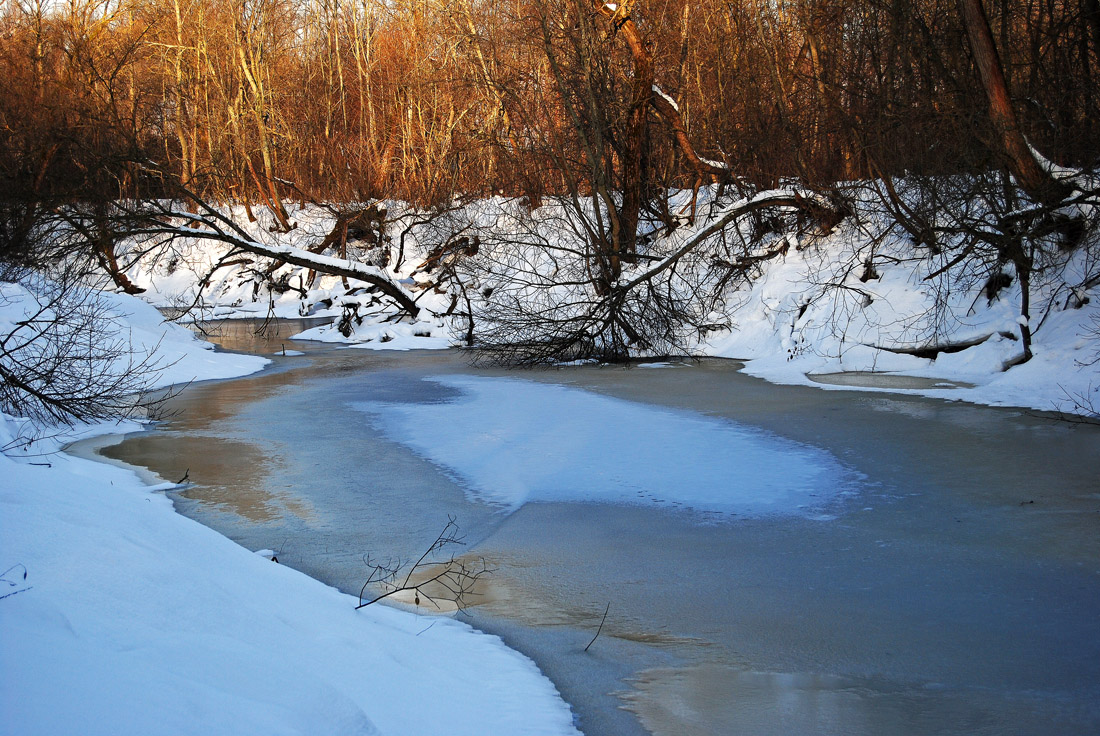 """фото """"Январь."""" метки: пейзаж, дикие животные"""